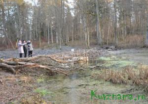 Возрождение Бакунинских прудов