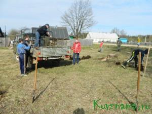 Школьники сажают сосны – аллею Победы. Сокольническое сельское поселение