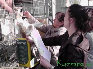С марта 2016 года в Кувшиновском районе работает программа поддержки частных крестьянских подворий
